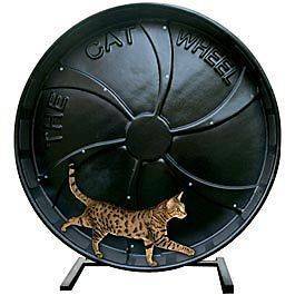 The Cat Wheel Exercise Wheel Toy JEFFERS PET AATAA