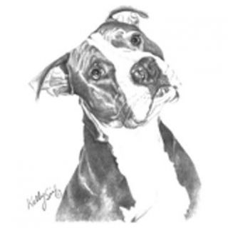 Pit Bull Pitbull Puppy Dog Black & White Kelly Six Artist Sketch White
