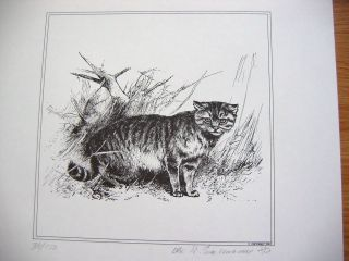 Civet Bob Cat Etching Black & White Signed Limited Edition 1968 One of