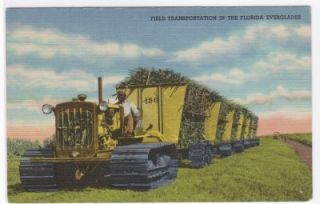 Bulldozer Sugar Cane Field Florida Everglades Postcard