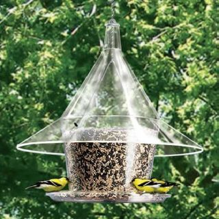 proof bird feeder the arundale mandarin sky cafe squirrel proof bird