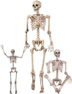 Life Size 60 Posable SKELETON HALLOWEEN prop Haunted House bucky