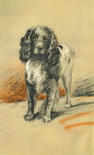 Dog Book 1946 English Springer Spaniel Story Illustrated by Lucy