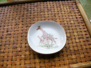 Royal Falcon Ware Collector Plate Weatherby Hanley Giraffes